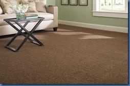 Martha Stewart Living Carpet Molasses
