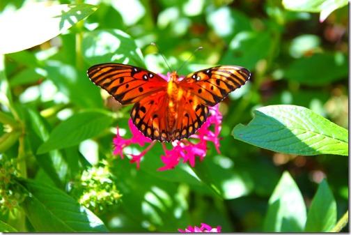 MYR - BG Butterfly