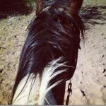Horse Back Riding in Phoenix: Ft McDowell Adventures #myphx #bloggersgo