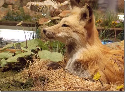 fox at draper museum