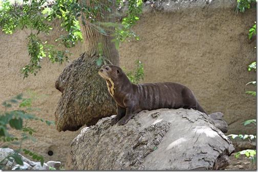 LA Otter
