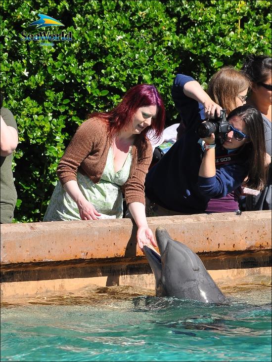 Beeb pets a dolphin
