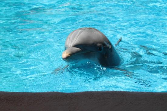 Dolphin closeup