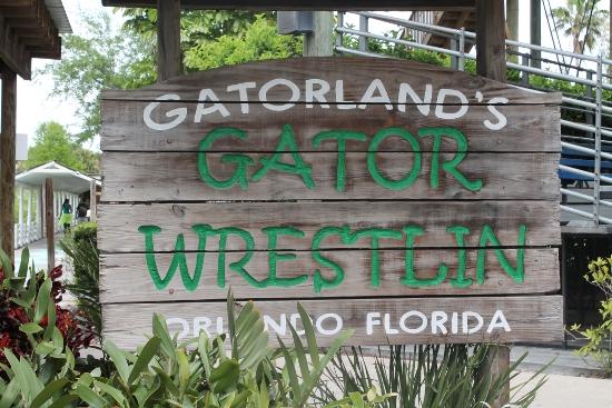 Gator Wrestlin'