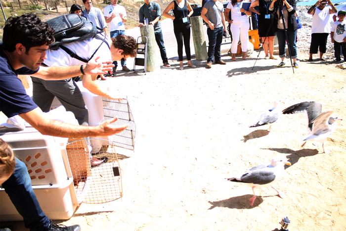 Gulls fly free!