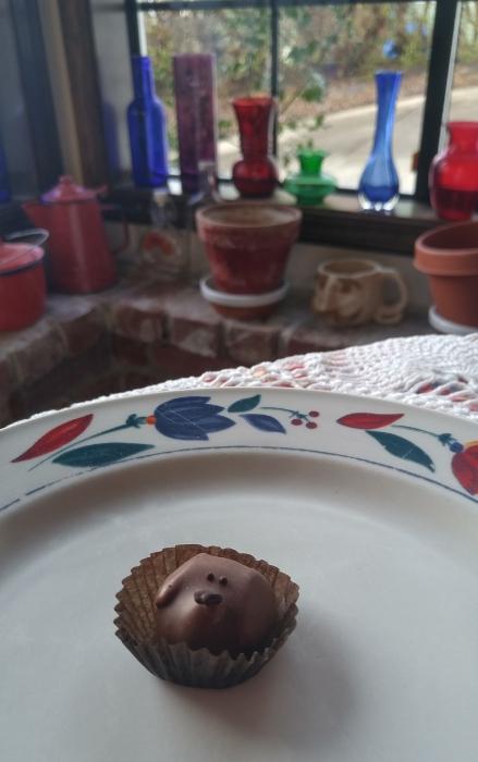 Chocolate puppy