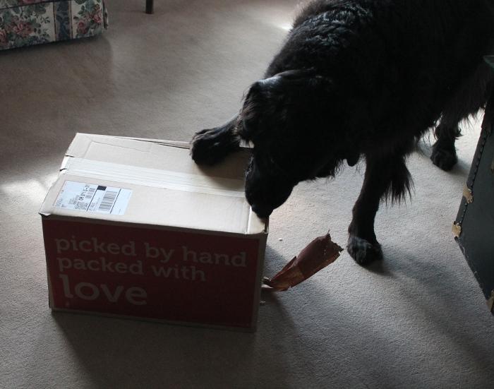 Bob opens the box