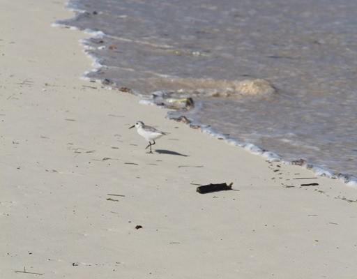 Photography: Bird Walk Punta Cana Beach
