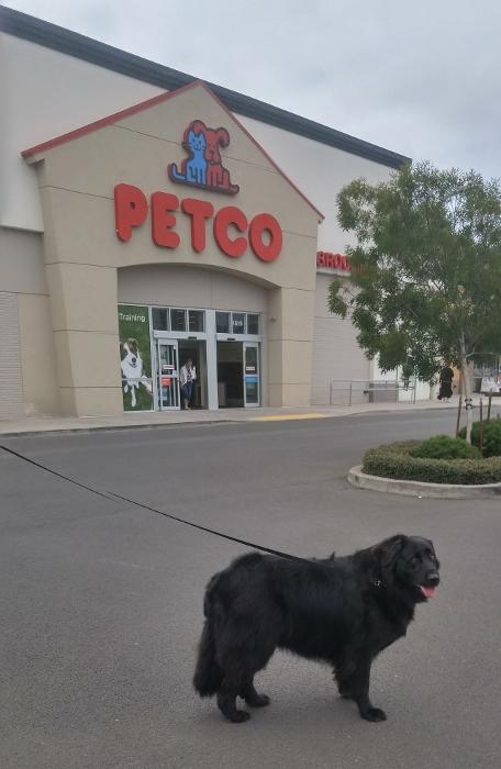 Visiting Petco Grooming