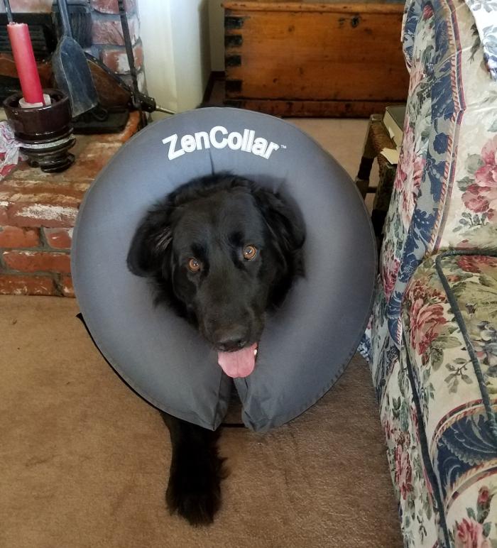 Bob in his cone