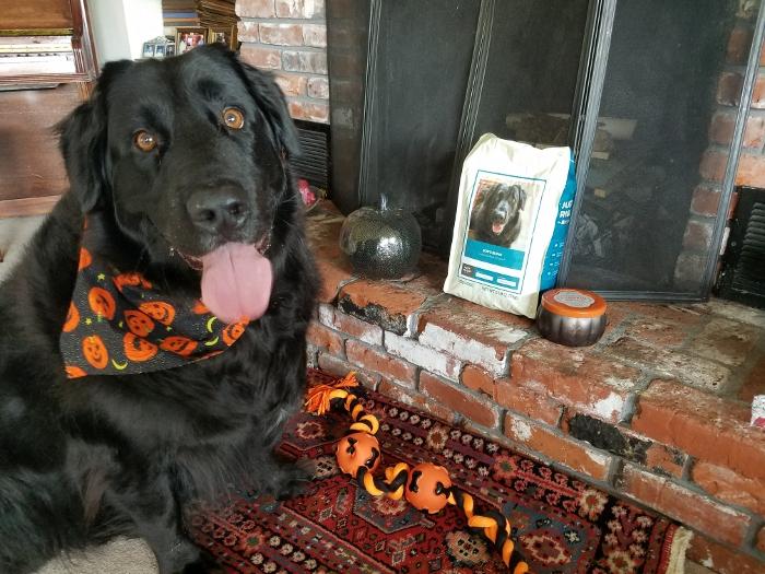 Bob's Halloween!