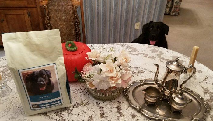 Bob's Thanksgiving #DogsofJustRight