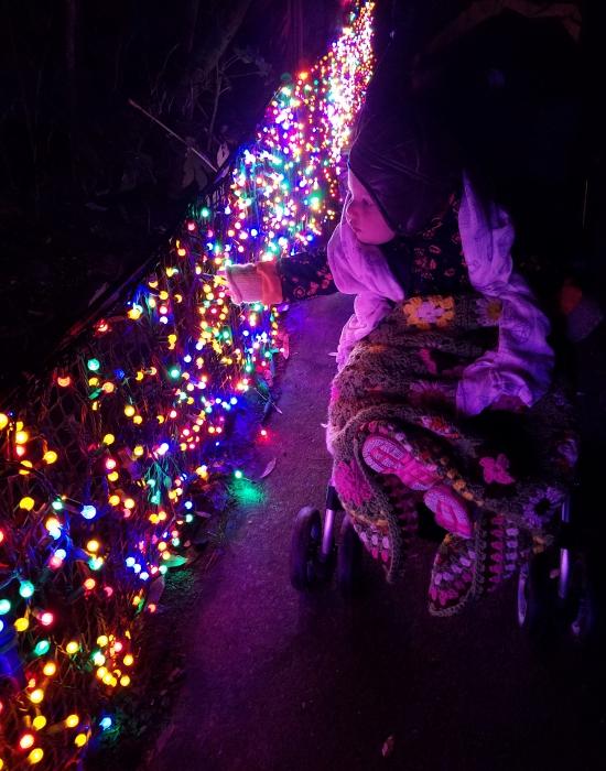 Juniper looks at the lights