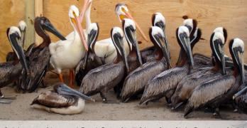 Celebrating National Bird Day: How You Can Help Birds in Need #DawnHelpsSaveWildlife