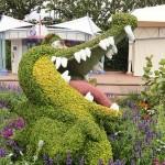 Photography: A Flowering Crocodile