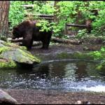 Photography: Captured A Bear At Northwest Trek