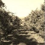 Photography: @TreeTopInc Apple Orchard Over Lake Chelan