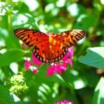 Nature Photography: I Spy a Butterfly #MYR_60Days