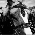 Sony NEX-5R Animal Photography: He's So Handsome #SonyCanyons