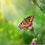 Butterfly Wonderland: Largest Butterfly Pavilion in Scottsdale Arizona May 25th #myphx #Bloggersgo