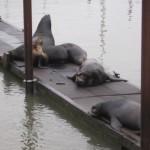 Photography: Sea Lions Wordless Wednesday #WW