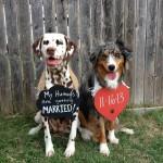 Milk-Bone Brushing ChewsTM & Two Cute Dogs & Giveaway
