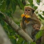 Adorable Images From Disneynature's Monkey Kingdom #MonkeyKingdom