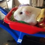 A Wheelbarrow Full of Fun!