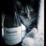 Riunite's Decadent Lambrusco Wine