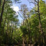 Experience Florida Wildlife With The Paddling Center #MyKissimmee #iFlyAlaska